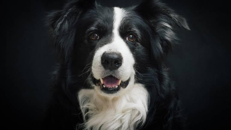 J'adopte un «chien d'occasion»