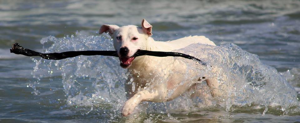 chien dans la mer avec un baton