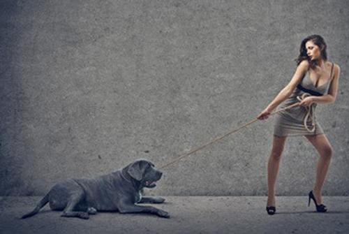 chien et escarpins