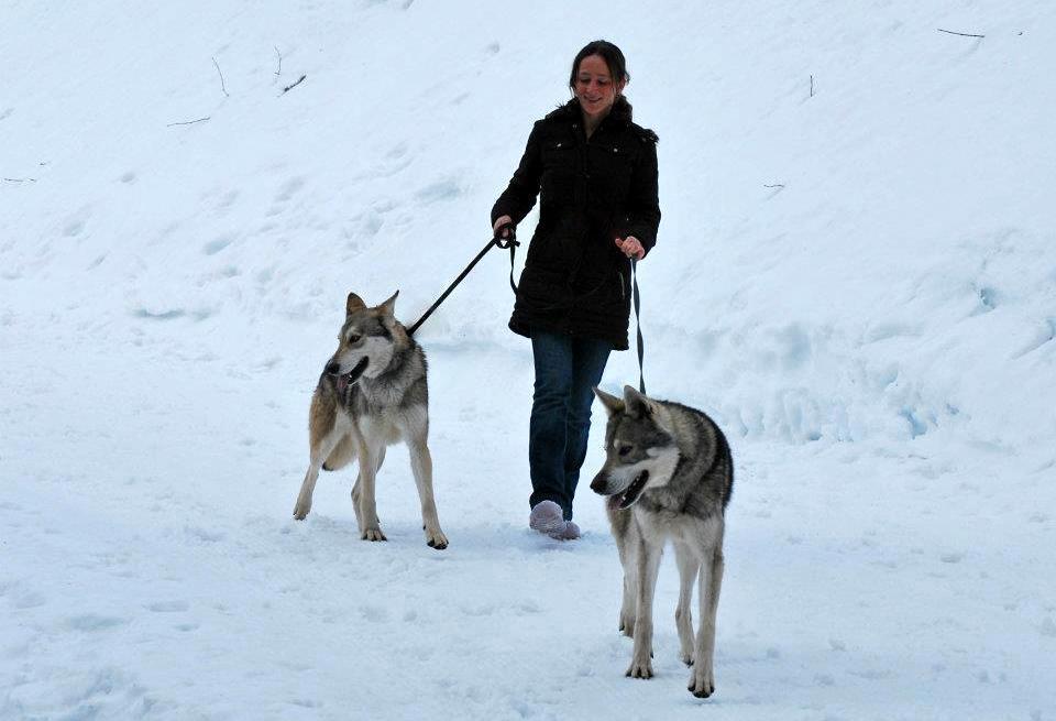 Promener en laisse son chien réactif de 50 kilos, quand on pèse soi-même 50 kilos. Partie 1/2
