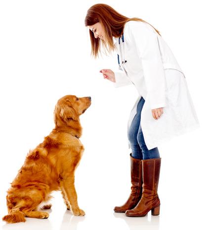 veterinaire donne friandise.jpg