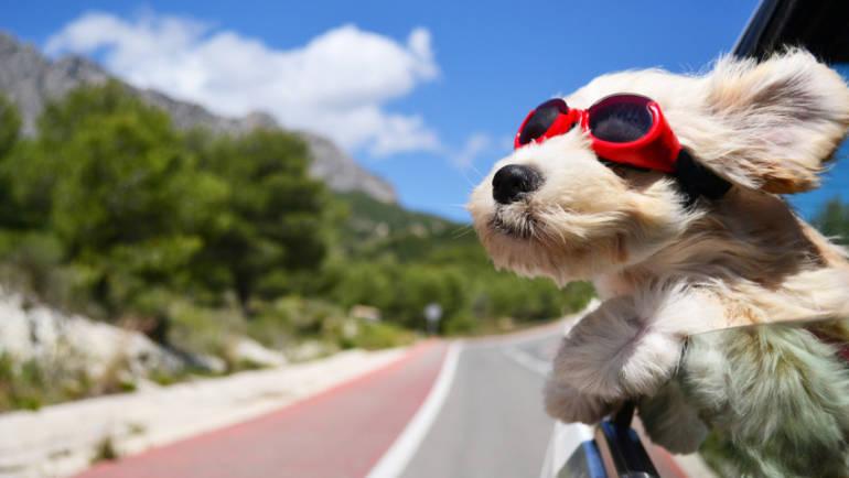 Comment bien voyager en voiture avec son chien ?