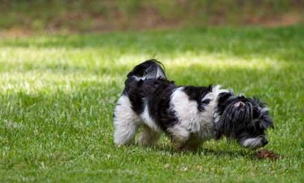 dog-sniffing-poop