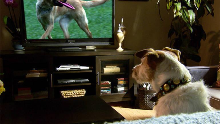 Que voit mon chien à la télévision ?