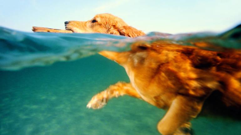 Comment apprendre à son chien à nager ?