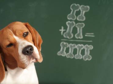 La formule mathématique pour combler votre chien