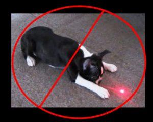 Pourquoi les pointeurs laser sont mauvais pour les chiens?