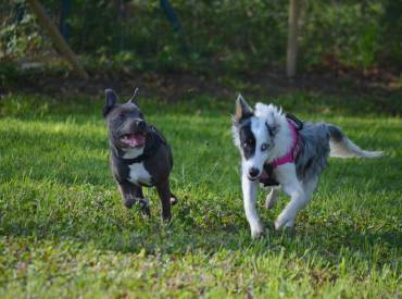 Les récréations éducatives canines